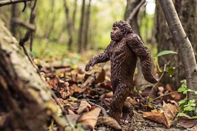 nature-walking-animal-strong.jpg